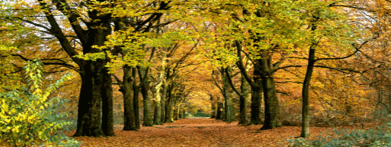 Path leading through falling leaves surrounded by trees